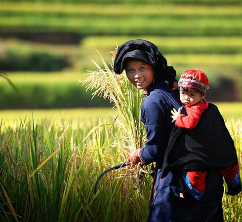 Trésor du nord vietnamien