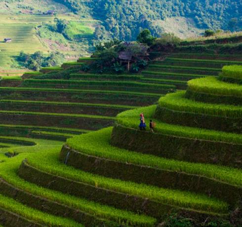 Circuit du grand Nord au Sud du Vietnam