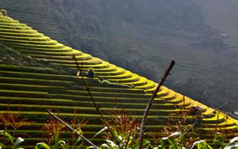 Top 5 magnifiques régions du Nord du Vietnam pour la randonnée